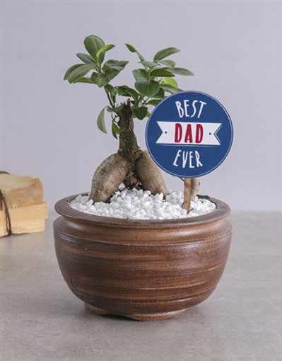 Picture of Best Dad Bonsai